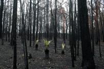 ORMAN YANGıNLARı - Avustralya'yı Bu Kez Şiddetli Yağışlar Vurdu