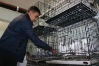 Diyarbakır'da Üç Bina Güvercinler İçin Otele Çevrildi