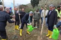 YOL ÇALIŞMASI - Hatay'da 10 Bin Çınar Ağacı Toprakla Buluşacak