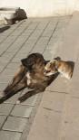 Tosya'da Kedi İle Köpeğin Dostluğu Şaşırttı