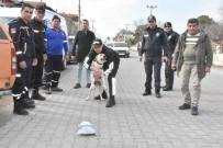 GÜLPıNAR - Köyceğiz'de Kaybolan İngiliz Aranıyor