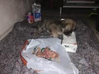 YAVRU KÖPEK - Sırtı Yanan Ve Açlıktan Bitkin Düşen Yavru Köpeğe Yardım Eli