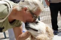 ÇANKAYA BELEDIYESI - Çankaya Belediyesinden Bin 3 Hayvana Yeni Yuva