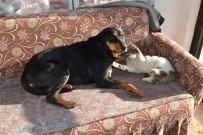 Kedi İle Köpeğin Dostluğu Görenleri Şaşırtıyor