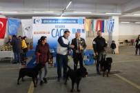 Köpek Irkları Yarışması Sona Erdi