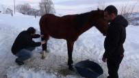 VAN YÜZÜNCÜ YıL ÜNIVERSITESI - Ölüme Terk Edilen Atları Jandarma Kurtardı