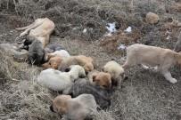 YAVRU KÖPEK - Aksaray'da Yavru Köpekler Soğukta Ölüme Terk Edildi