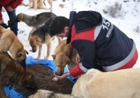 HALKLA İLIŞKILER - Ankara Büyükşehir Belediyesi Sokak Hayvanları İçin İlk Kez Hizmet İçi Eğitim Çalışması Başlattı