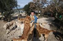 EVCİL HAYVAN - Sahipsiz Köpek Bırakmadı