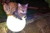 Sokakta Üşüyen Kedi Isınmak İçin Bu Yolu Seçti