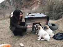 Aç Kalan Köpekler İçin Topyekun Seferberlik