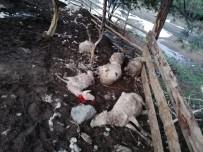 KURBAN BAYRAMı - Ağıla Giren Köpekler 10 Koyunu Telef Etti