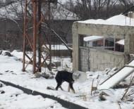 YAVRU KÖPEK - Başı Bidona Sıkışan Yavru Köpeği Jandarma Kurtardı