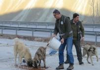 Erzincan'da Yaban Hayatına Yem Desteği