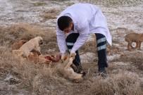 YAVRU KÖPEKLER - Ölüme Terk Edilen Köpeklere Aksaray Belediyesi Sahip Çıktı