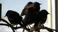 HINDISTAN - Van'da Ele Geçirilen Çiğdeci Kuşları Hayvanat Bahçesine Gönderilecek