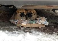 YAVRU KÖPEKLER - Yavru Köpeklerin Soğukta Yaşam Mücadelesi Yürek Burktu