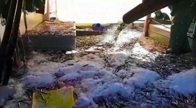 Büyük Teknenin Hamsiyle Dolup Taştığı Anlar Kamerada Açıklaması Tam 3 Bin Kasa