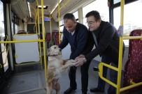 Üşüyen Köpek Yolcularla Şehir Turu Attı