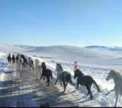 Yılkı Atları İçin Doğaya 2 Ton Yem Bıraktılar