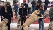 BASIN AÇIKLAMASI - Kangal Köpekli Basın Açıklaması