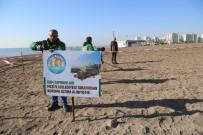 Mezitli Belediyesi Kum Zambaklarını Korumaya Aldı