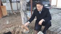 KAYMAKAMLIK - Ölmek Üzere Bulduğu Köpekleri Sahiplenen Kaymakam Gönülleri Fethetti