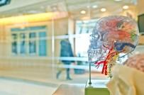 İNSANOĞLU - Prof. Dr. Uğur Batı Açıklaması 'Düzensiz Gelir Beyin Sağlığını Olumsuz Etkiliyor'