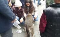 Aracın Çarptığı İddia Edilen Köpeğe Vatandaşlardan Şefkat Eli