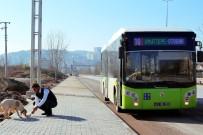 Halk Otobüsü Sürücüleri Sokak Hayvanlarını Elleriyle Besliyor