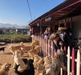 HALKLA İLIŞKILER - Özhan Gönüllüleri'nden Sokak Hayvanlarına Destek