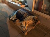 HAVA SICAKLIĞI - Hayvanseverlerin Şefkati Takdir Topluyor