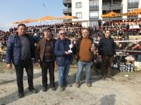 Burhaniye'de Deve Güreşlerini 15 Bin Kişi İzledi