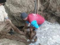 SOMA - İçme Suyu Hattından 20 Metrelik Ağaç Kökü Çıktı