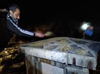 EKOLOJIK - Beşiktaşlı Taraftarlardan Yaban Hayatına Yem Desteği