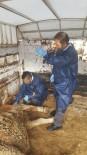 AĞRI KESİCİ - Depremde Yaralanan Hayvanlar Tedavi Edildi