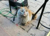 Depremzede Kediye Antalya Büyükşehir Eli