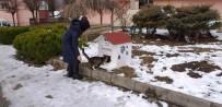Tarihi Kentte Sokak Hayvanlarına Ev