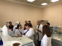 MAÜ'den Derik Halhalı Zeytini Projesi