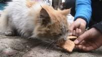Depremin Çocukları Sokak Hayvanlarını Unutmuyor