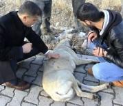 AĞRI KESİCİ - Kaymakamdan Yaralı Köpeğe Şefkat Eli