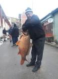 Savcılı Barajından 25 Kiloluk Sazan Balığı Çıktı
