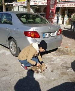 Antalya'da Hayvanseverlerden Kediyi Ezen Sürücüye Tepki