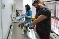 MALTEPE BELEDİYESİ - Vetbüs İle Maltepe'de Sokak Hayvanlarına Yerinde Tedavi