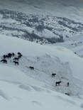 DURANKAYA - Hakkari Valiliği Sahipsiz Atlara Sahip Çıktı