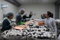 (Özel) Engelli Öğrenciler Mantar Üretimine Başladı, Hedef Yılda 1,5 Ton