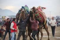 DEVE GÜREŞLERİ - Ayvalık'ta Deve Güreşleri Piknik Coşkusunda Yapıldı