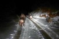 SÜLEYMAN OLGUN - Bu Ayılar Kış Uykusuna Yatmadı
