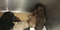 YAVRU KÖPEKLER - Yol Kenarına Atılmış Çuval İçerisindeki Yeni Doğmuş Yavru Köpekleri Vatandaşlar Kurtardı