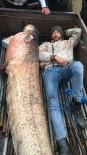 120 Kiloluk Yayın Balığının Yanında Yattılar